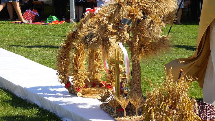 Przewodniczący Episkopatu: praca rolnika to służba wobec stworzenia