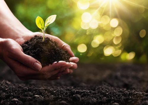 Homilia: Owe cuda natury są dziełem samego Twórcy piękna. 100. lecie Regionalnej Dyrekcji Lasów Państwowych w Poznaniu (Katedra Poznańska – 1.02.2020)